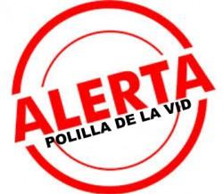 ALERTA POLILLA