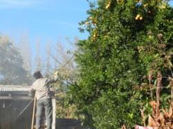 cosecha de fruta